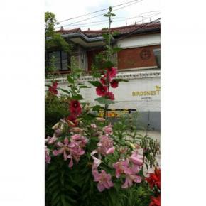 Hostels und Jugendherbergen - Birdsnest Hostel Hongdae